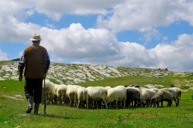 canstockphoto8635325-Shepherd-watching-flock2
