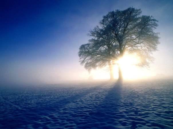 winter_morning_wallpaper